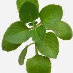 The Use Of Oregano As An Antibiotic