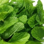 medicinal plants - peppermint