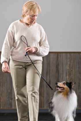 dog as alternative therapy