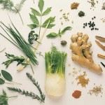 Why Should You Use Herbs for Healing?