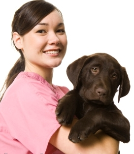 Alternative Treatments for Pets