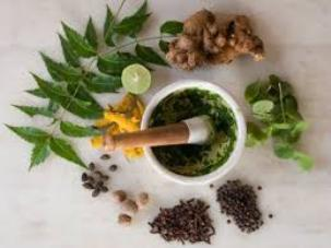 The Best Ayurvedic Treatments for Diabetes