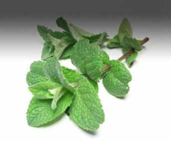 Peppermint Qualities You Did Not Know