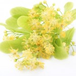 uses and benefits of linden
