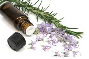 Herbal Tinctures for Weight Loss