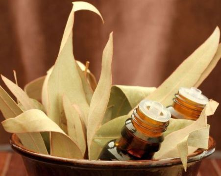 Winter and The Benefits of Eucalyptus
